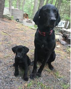 Judd and puppy