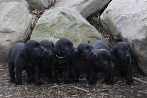 Puppies - Future Life Savers
