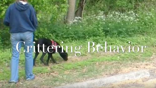 Crittering Behavior