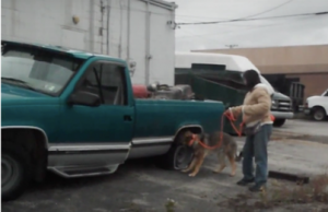 Dog Sniffing Truck