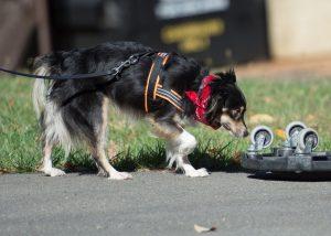 Dog Sniffing Wheel