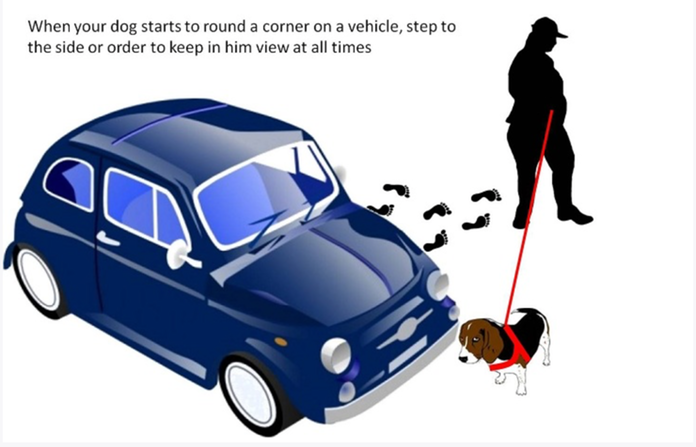 Dog handling around a vehicle