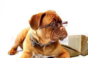 Dog wearing glasses with book