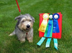 Dog with ribbons