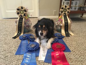 Why Louisville Ribbons