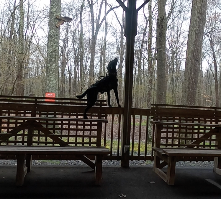 The Off Leash Fulcrum: Independence and Odor Obedience