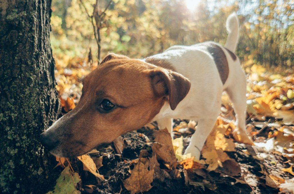Sniffing and Nosework: The Activity for All Dogs